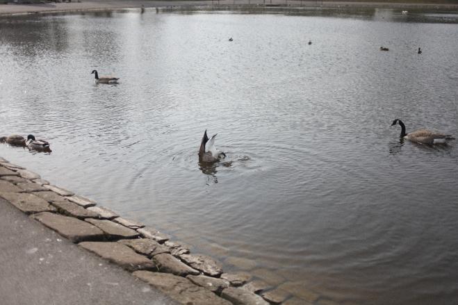 lakes blackpool liverpool -3